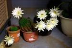 7flowerss
