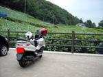 Hikage_bike