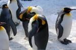 Penguin3_1
