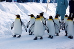 Penguin_sampo
